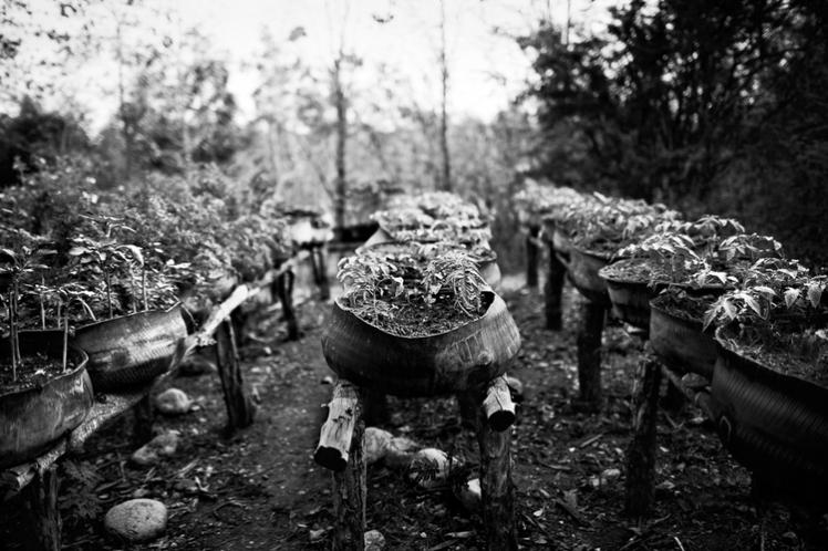 Bear Guerra image for Haiti series article 2